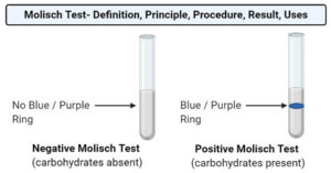 Molisch Test- Definition, Principle, Procedure, Result, Uses