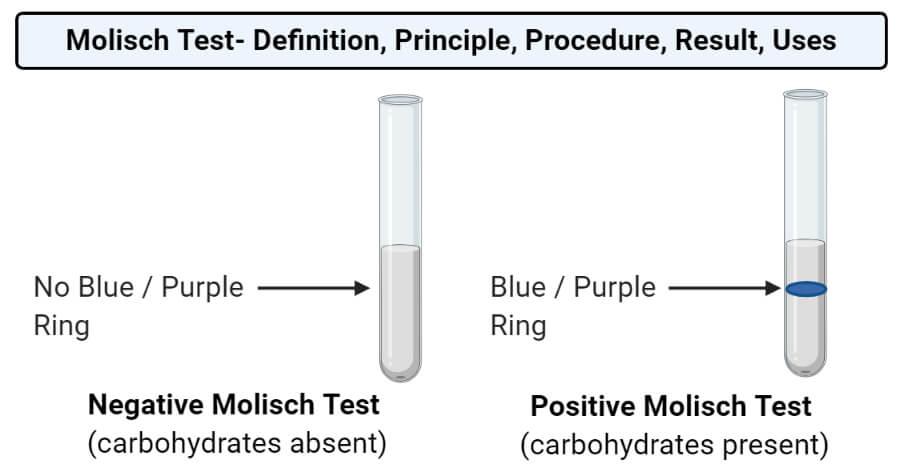 Molisch Test