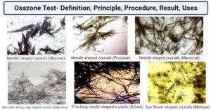 Osazone Test- Definition, Principle, Procedure, Result, Uses