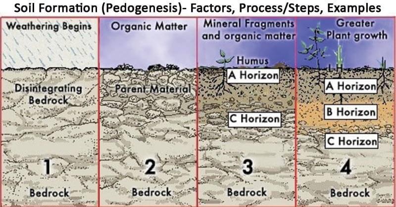 Soil Formation (Pedogenesis)