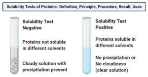 Solubility Tests of Proteins