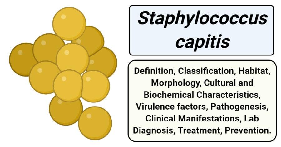 Staphylococcus capitis