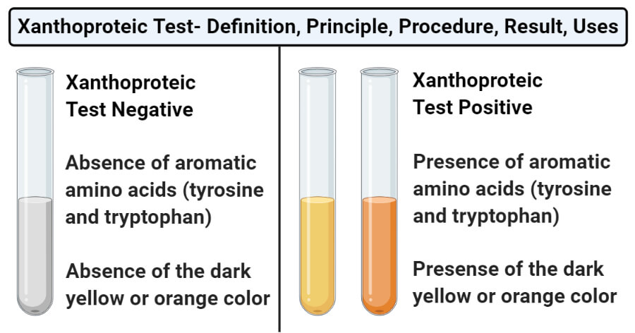 Xanthoproteic Test