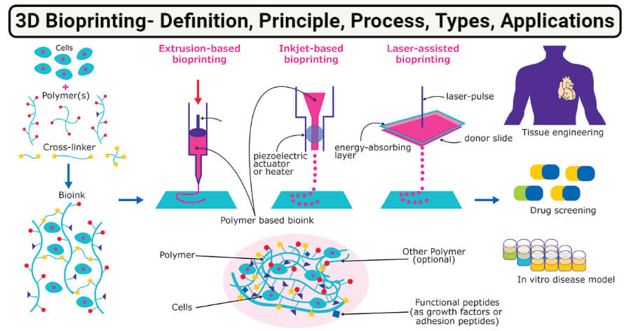 3D Bioprinting- Definition, Principle, Process, Types, Applications
