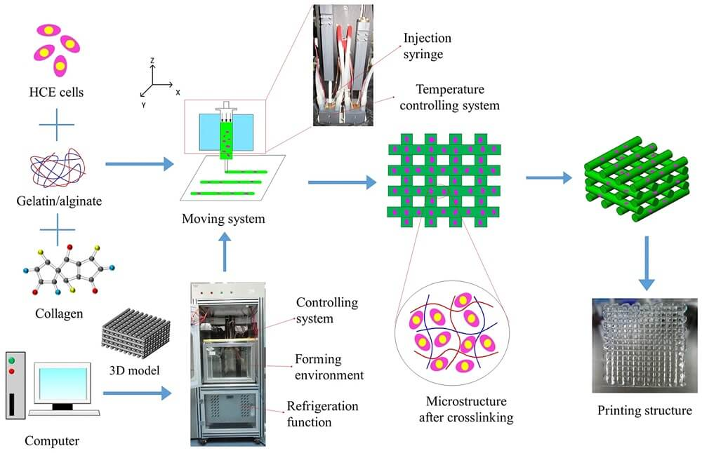Basic Principle of 3D Bioprinting