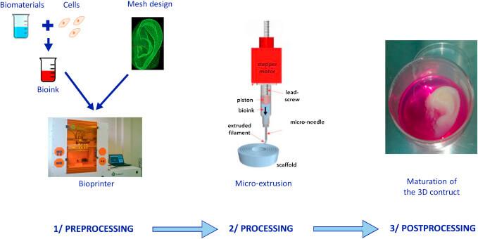 Basic Steps of 3D Bioprinting (process)