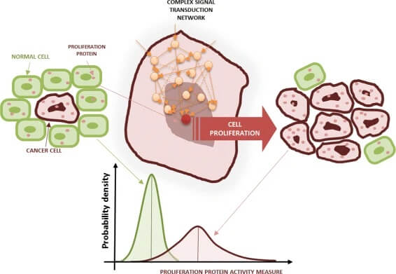 Cell proliferation and cancer cells
