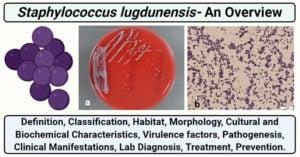 Staphylococcus lugdunensis
