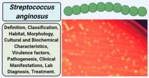 Streptococcus anginosus
