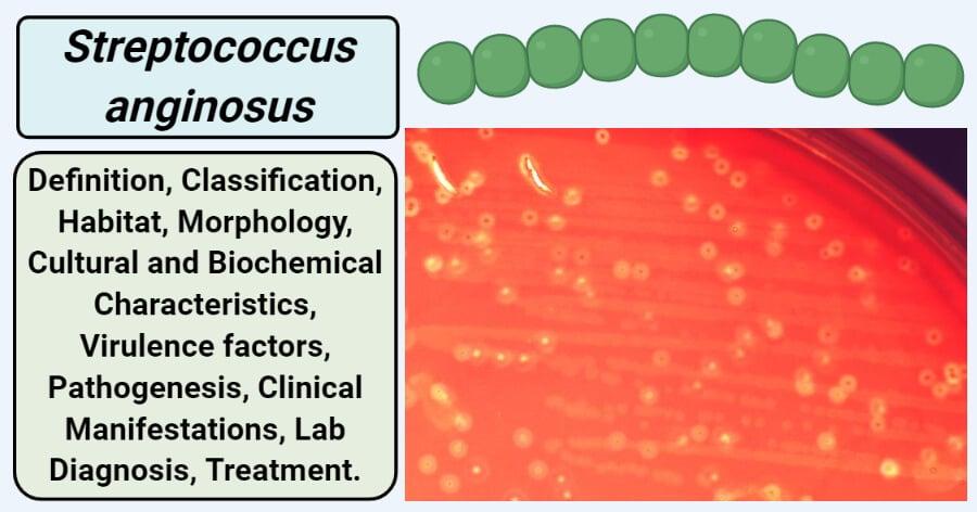 streptococcus anginosus milleri férfiak kenetében)