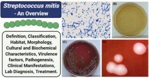 Streptococcus mitis
