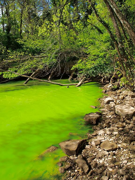 Eutrophication of Potomac river