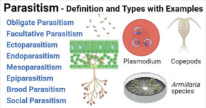 Parasitism Interaction