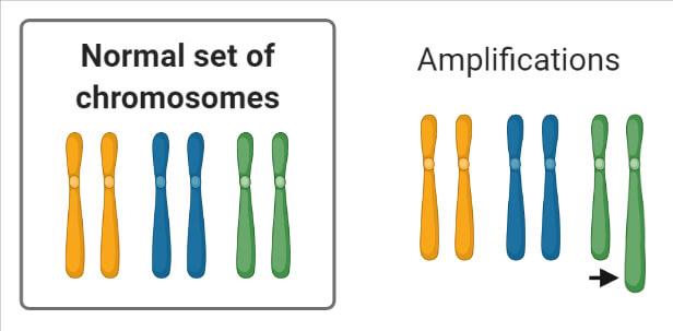 Chromosomal Mutation Amplifications
