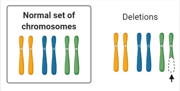Chromosomal Mutation Deletions