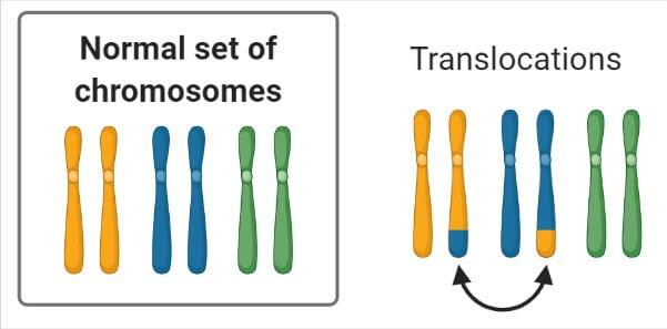 Chromosomal Mutation Translocations