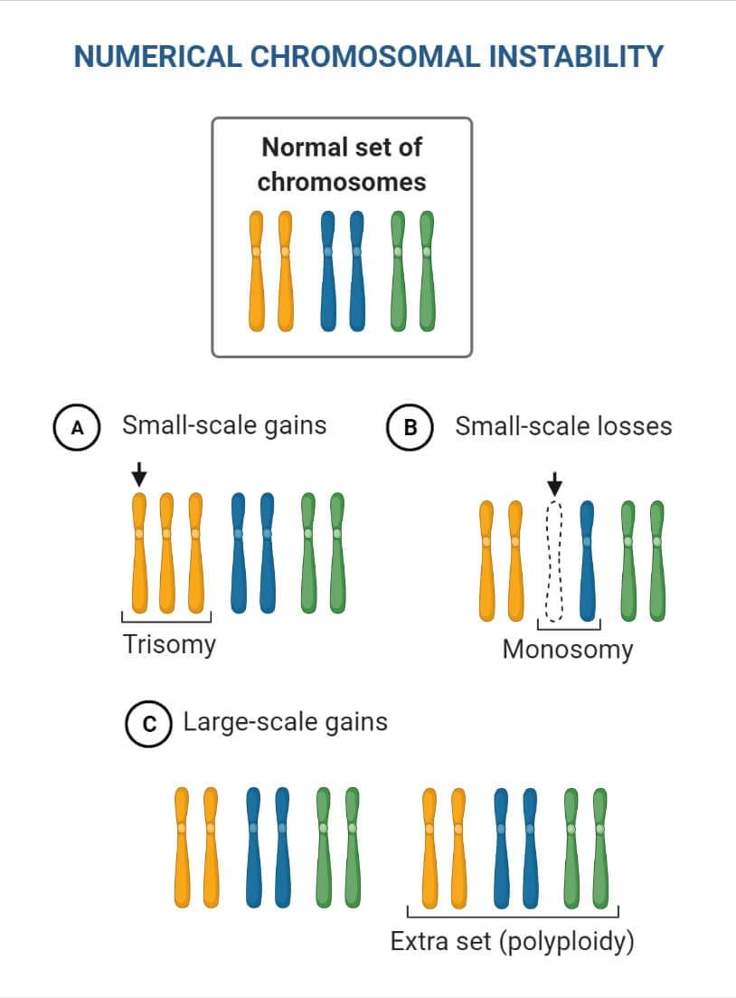 Chromosomal Mutations II