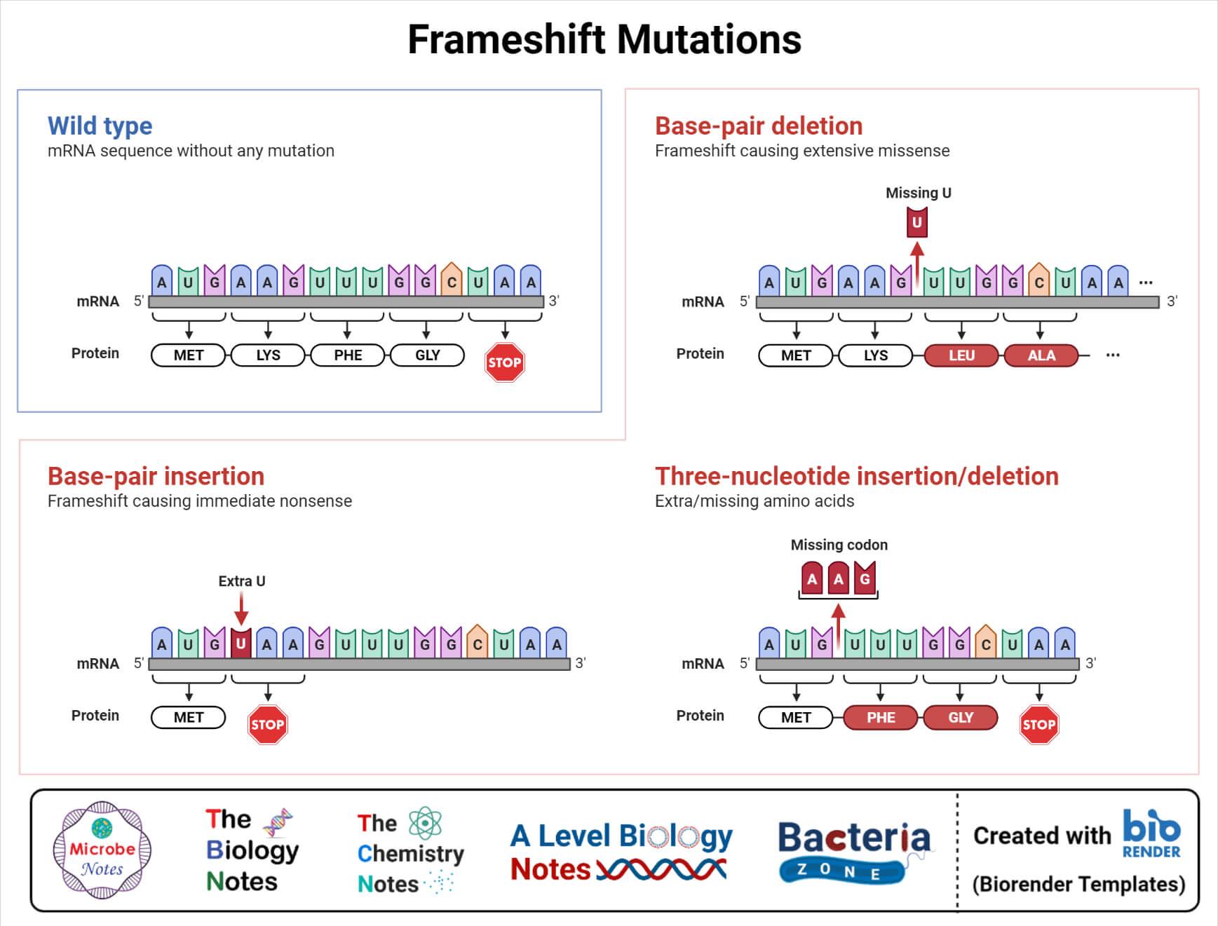 Frameshift mutation