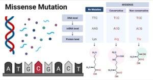Missense-Mutation