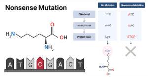 Nonsense Mutation