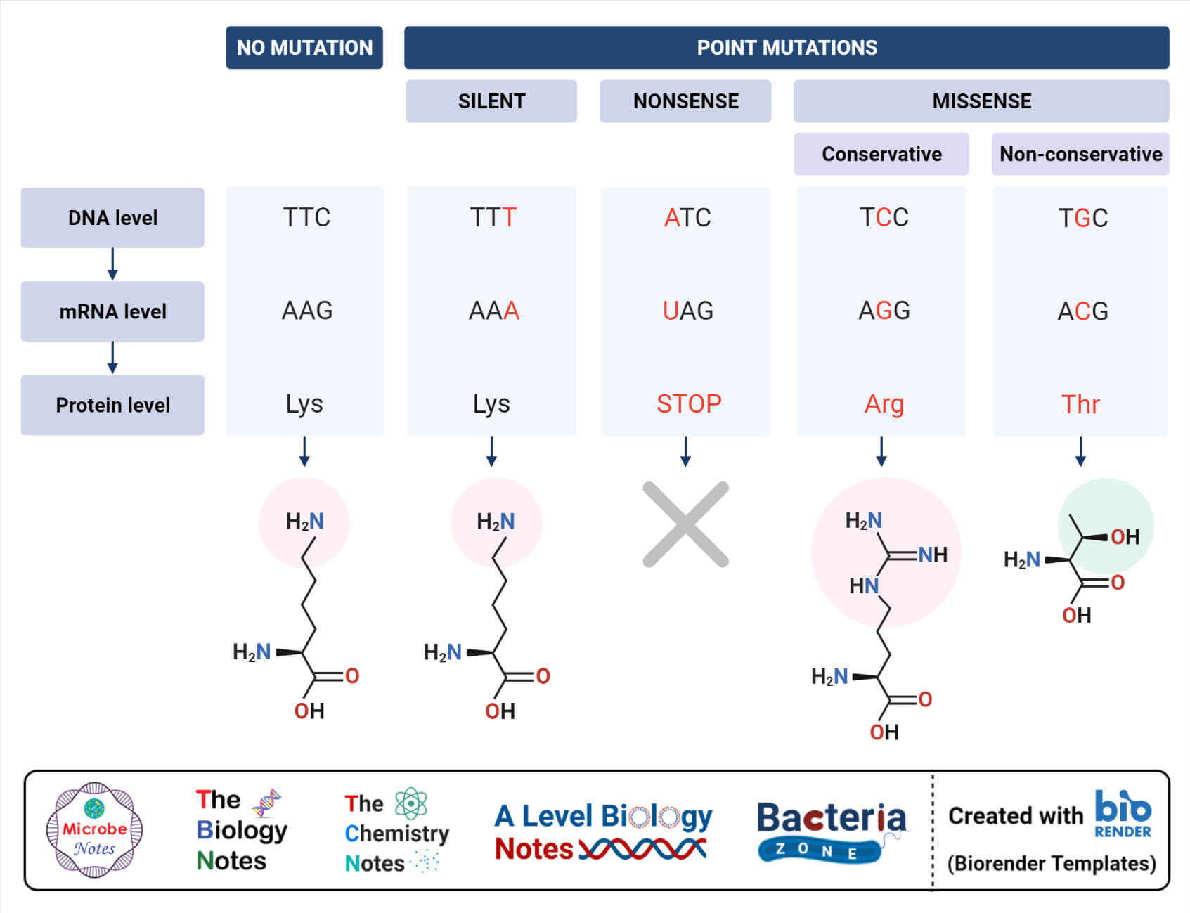 Types of Point Mutation
