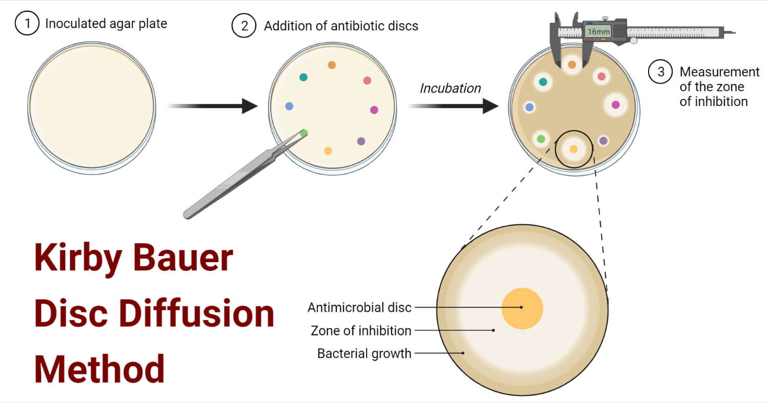 Kirby Bauer Disc Diffusion Method For Antibiotic Susceptibility Testing