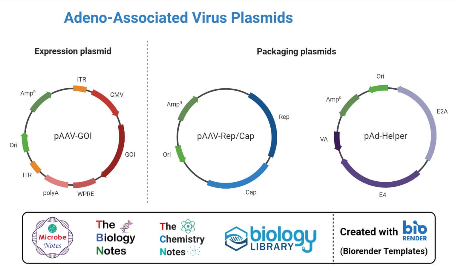 Plasmids for Adeno-Associated Virus Vector Production.