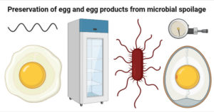 Preservation of egg and egg products from microbial spoilage