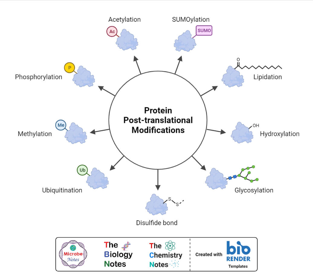 Protein Post-Translational Modifications