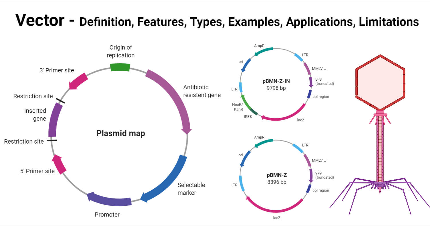 Vector- Definition, Features, Types, Examples, Applications