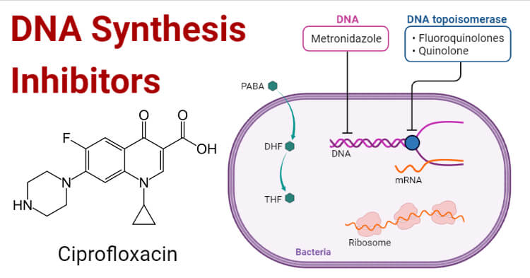 DNA Synthesis Inhibitors