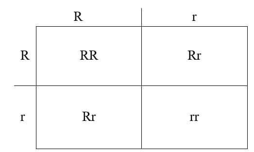 Punnett square- Seed form in Pea plant