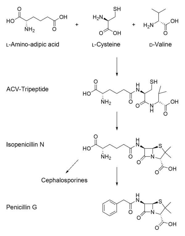 Biosynthesis of Penicillin G
