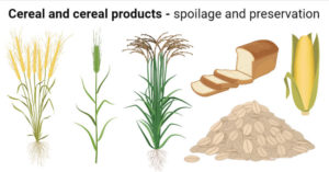 Microbial spoilage and preservation of cereal and cereal products