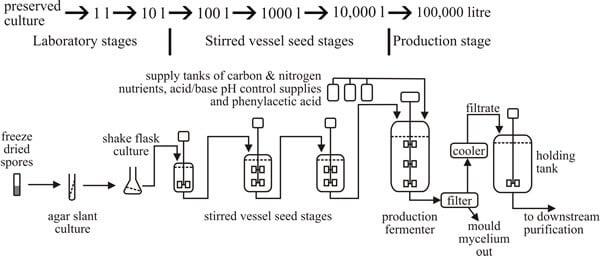 Penicillin Production Process