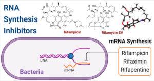 RNA Synthesis Inhibitors- Rifamycin
