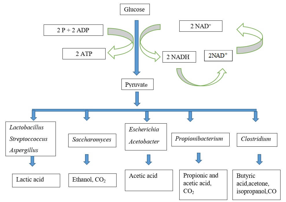 Principle of fermentation