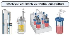 Batch vs Fed-Batch vs Continuous Culture