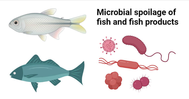 Microbial spoilage of fish and fish product and its preservation